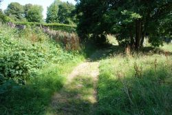 Common-Vic-Cem-mown-path