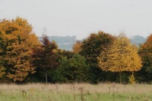 common-autumn-2---Copy