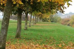 common-autumn-6---Copy