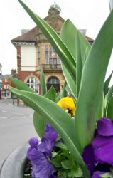 town-hall-from-spring-planter