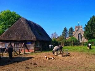 minal-horses-crop